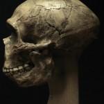 Neanderthal02