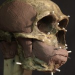 Neanderthal07