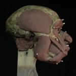 Neanderthal14