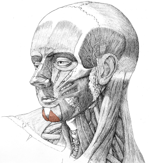 Mentalis, drawing by Danial Maidman