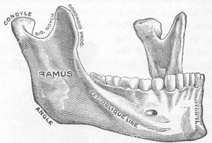 Parts of the Mandible