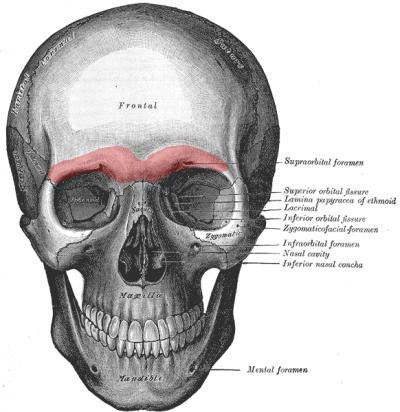 online anatomy class